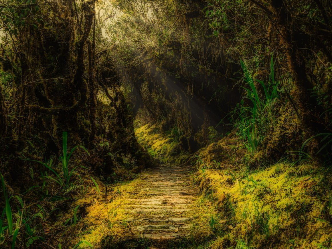 Hiking trail through the moss forest