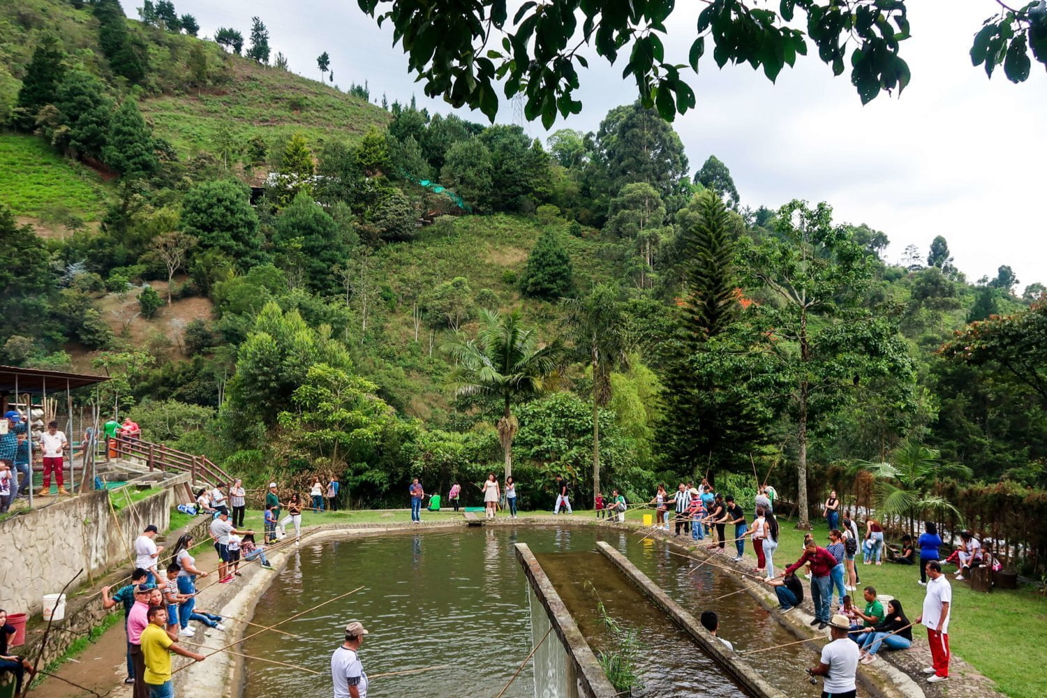locals fishing for their trucha (trout) at el salado's truchera envigado