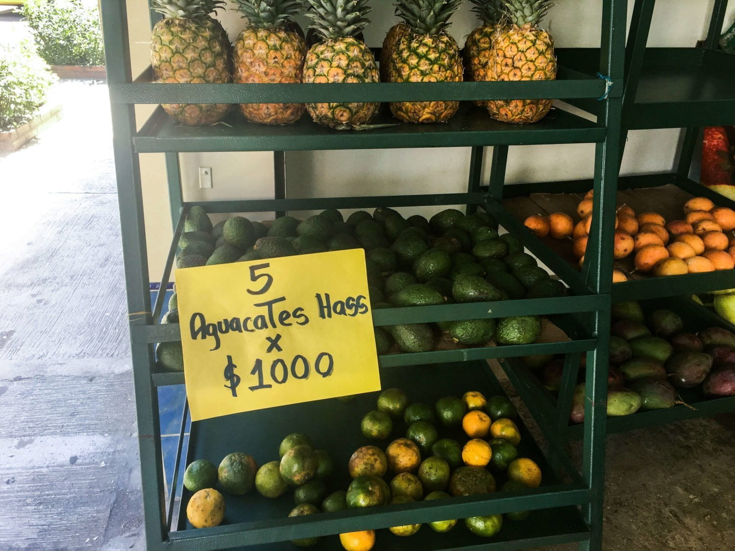 cheap avocados 5 for 1000 pesos envigado