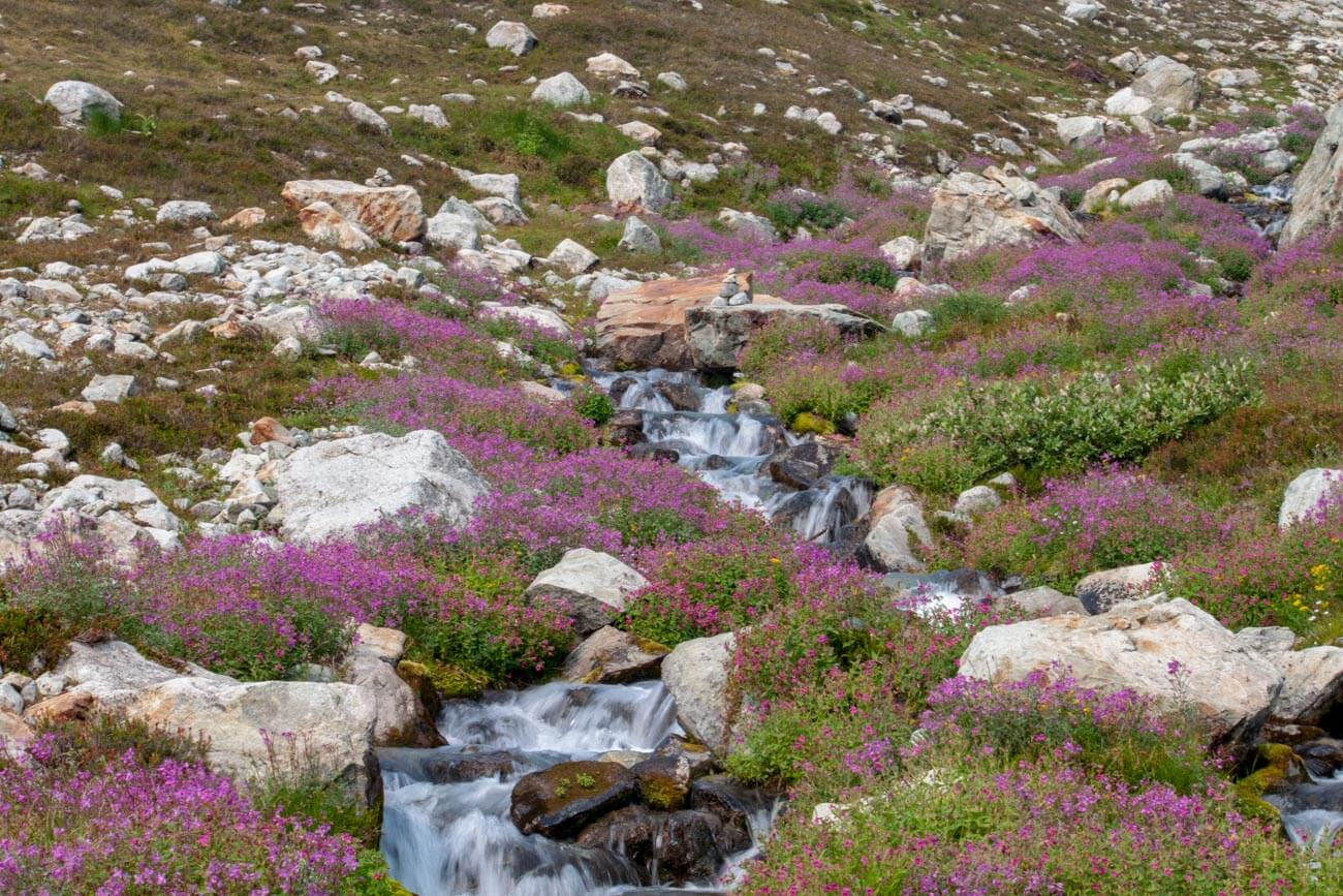 Wildflowers and stream