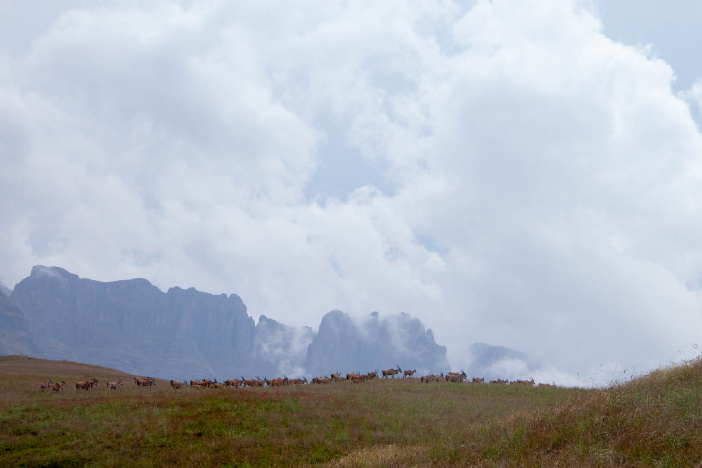 Antelope in the Drakensberg's Cathedral Peak