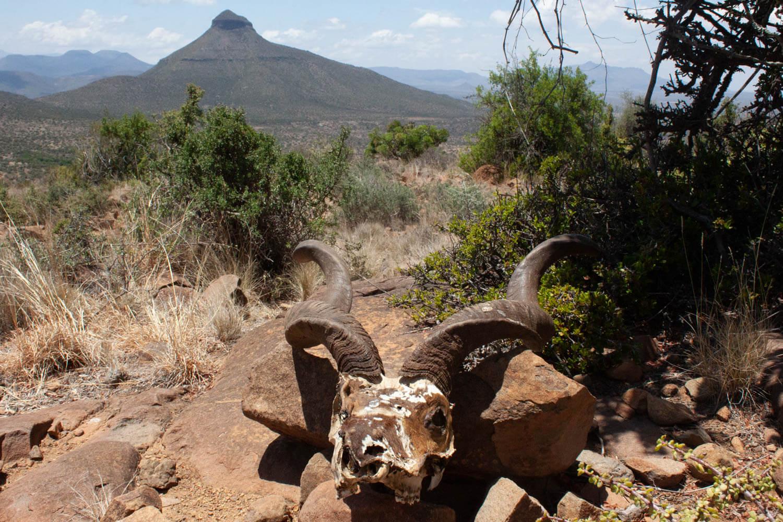 Karoo desert skull and mountain