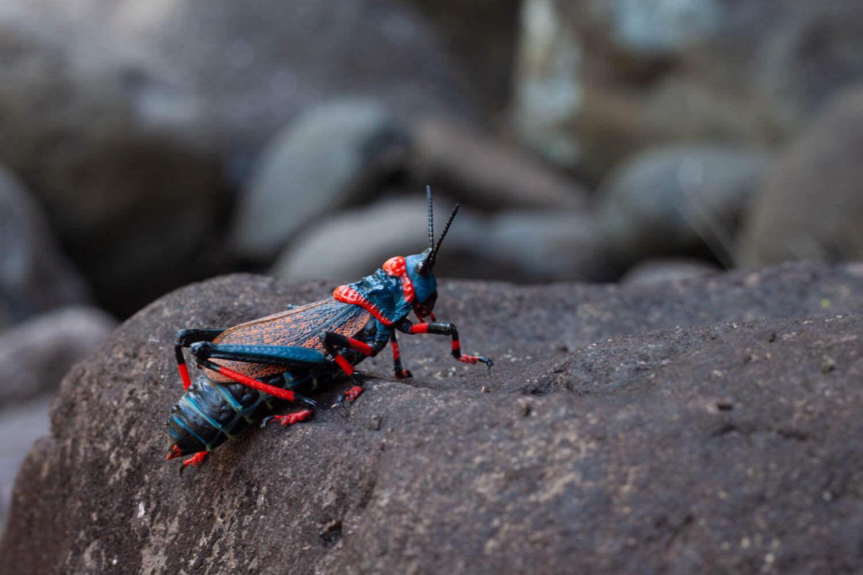 Crazy looking grasshopper