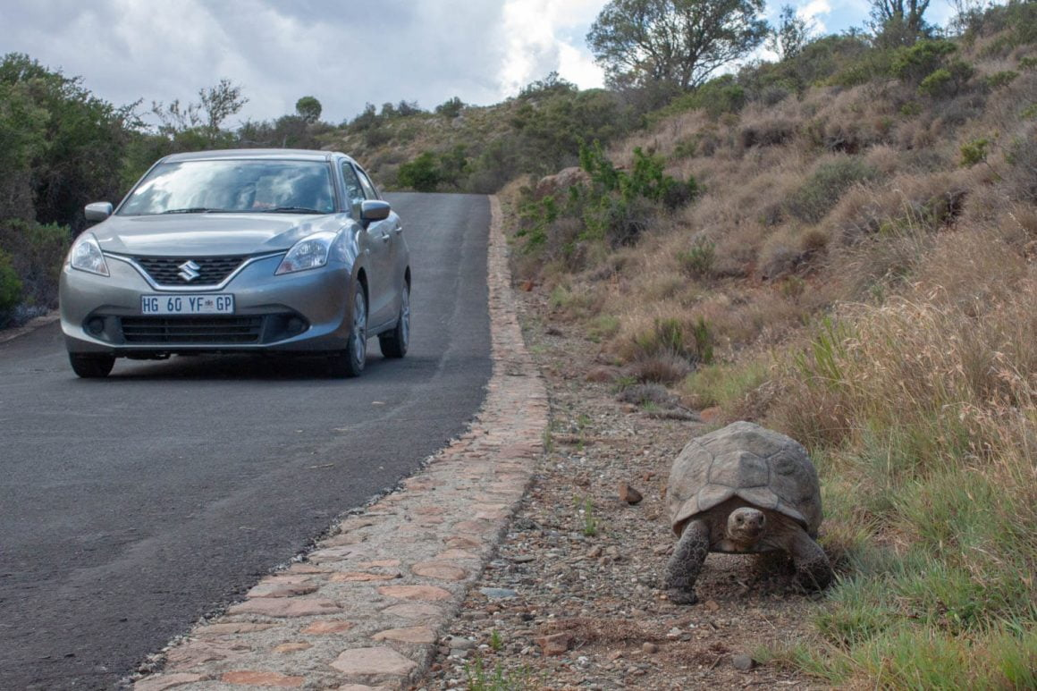 Tortoise on the side of the road.