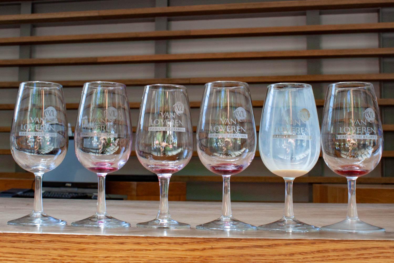 Line-up of empty tasting glasses at Van Loveren winery