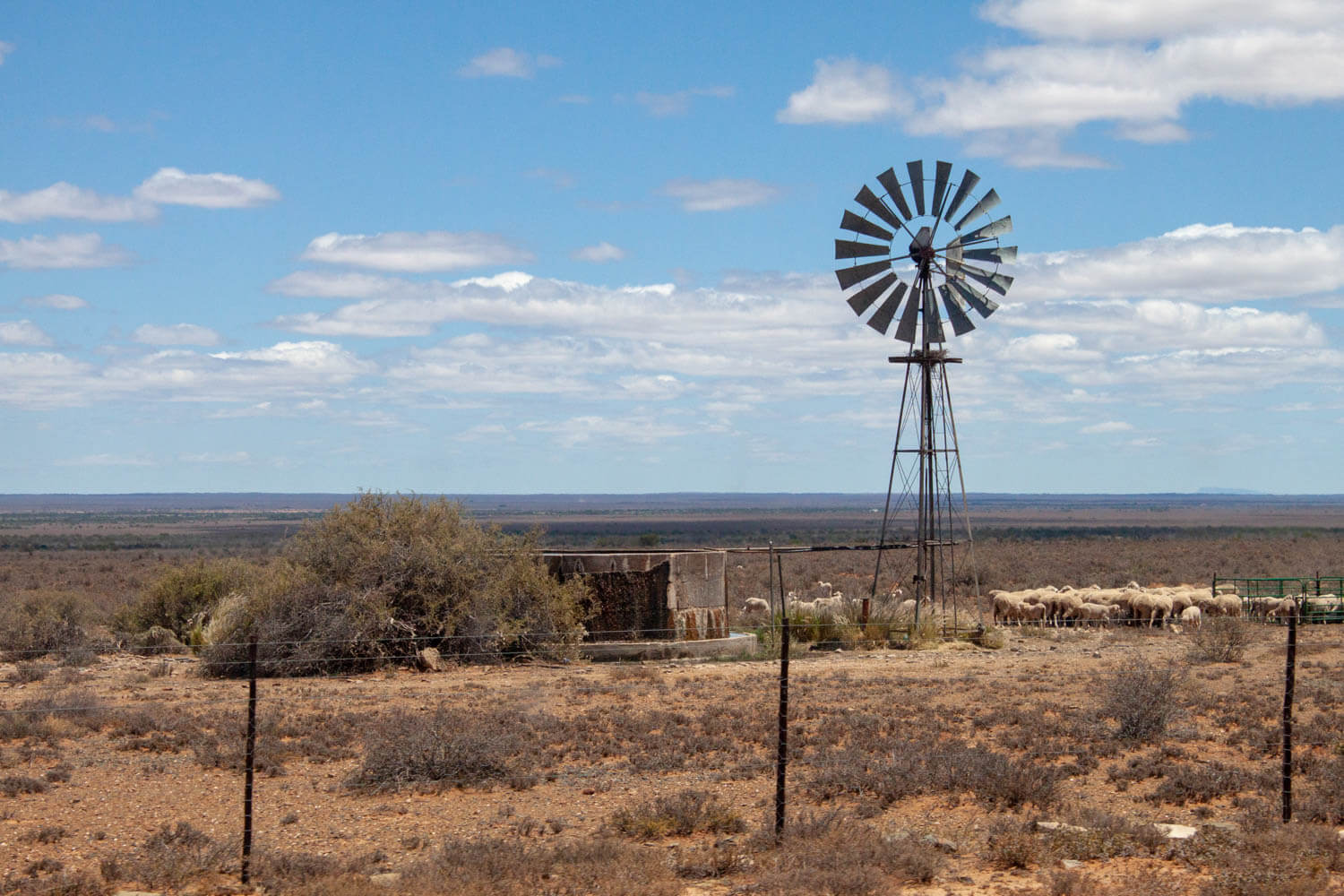 Karoo desert with sheep and windmill