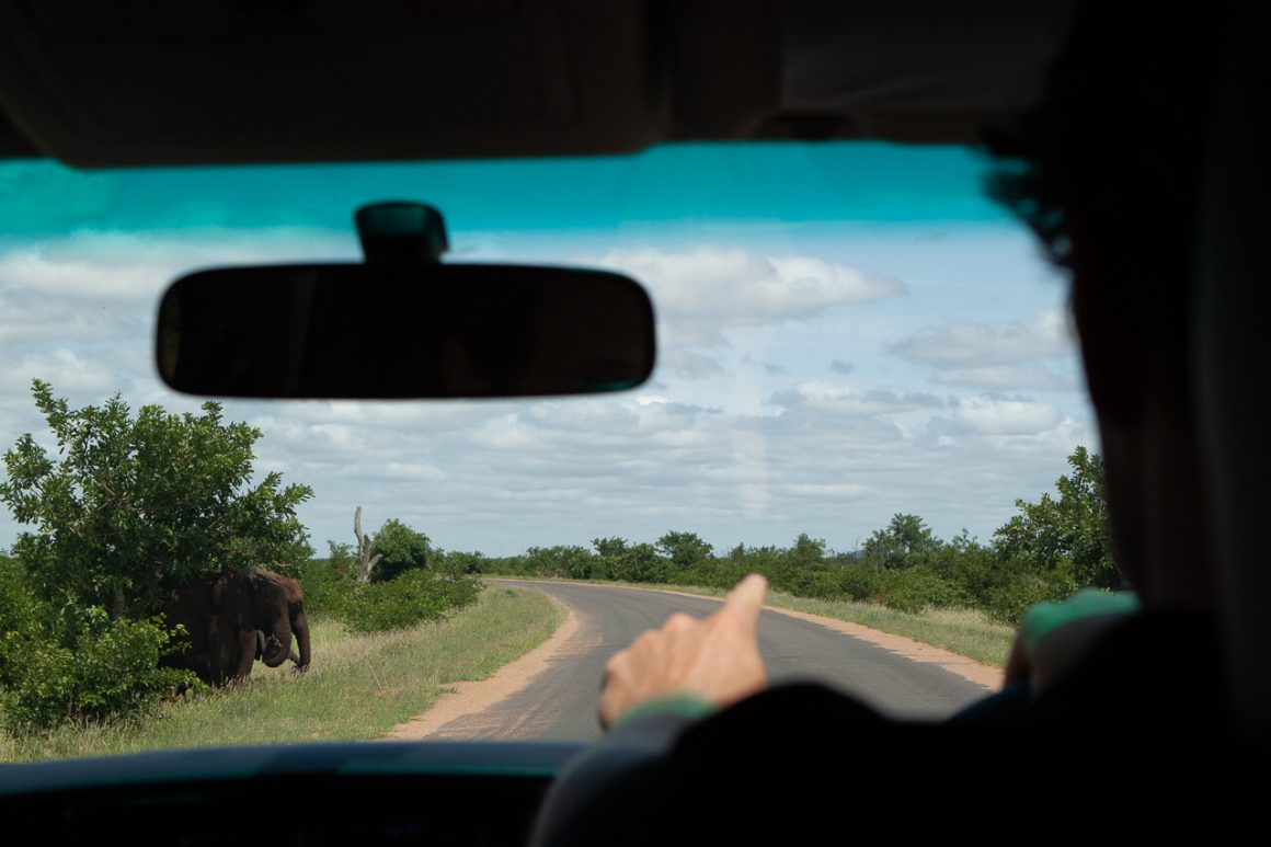 Driving along a Kruger Park road with an elephant hiding behind a bush.