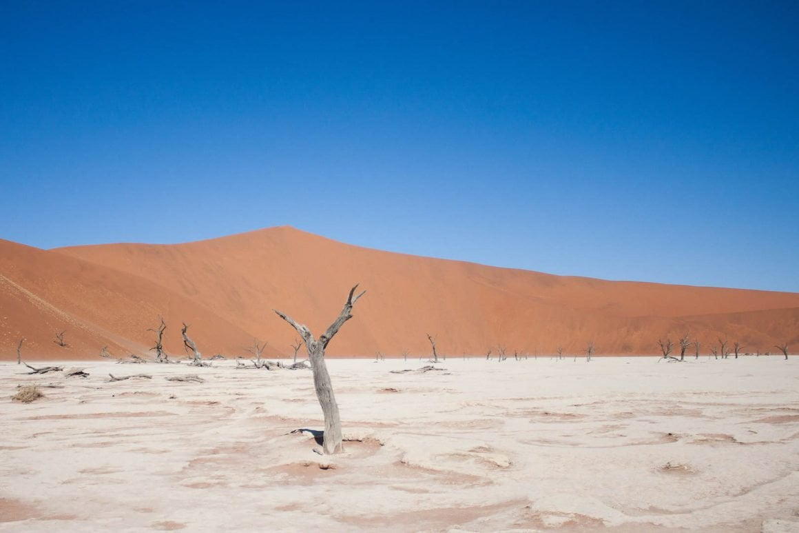 Lonely tree in Dead Vlei in Sossusvlei, Namibia.