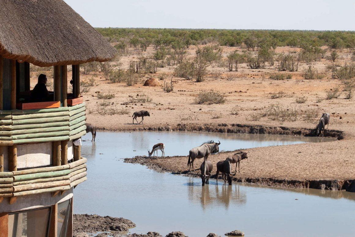 Oliphantrus watering hole in Etosha, Namibia.
