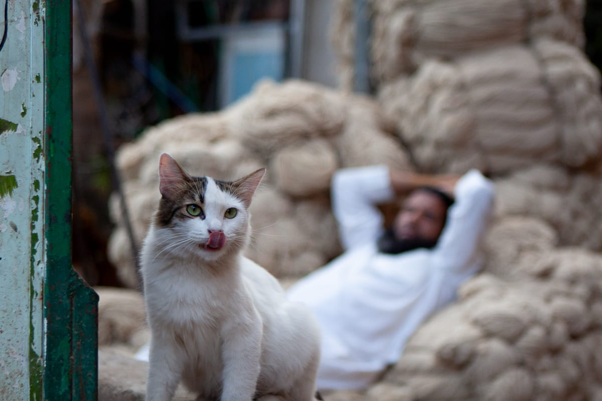 Cat and wool vendor chilling out in the busy Marrakech medina.