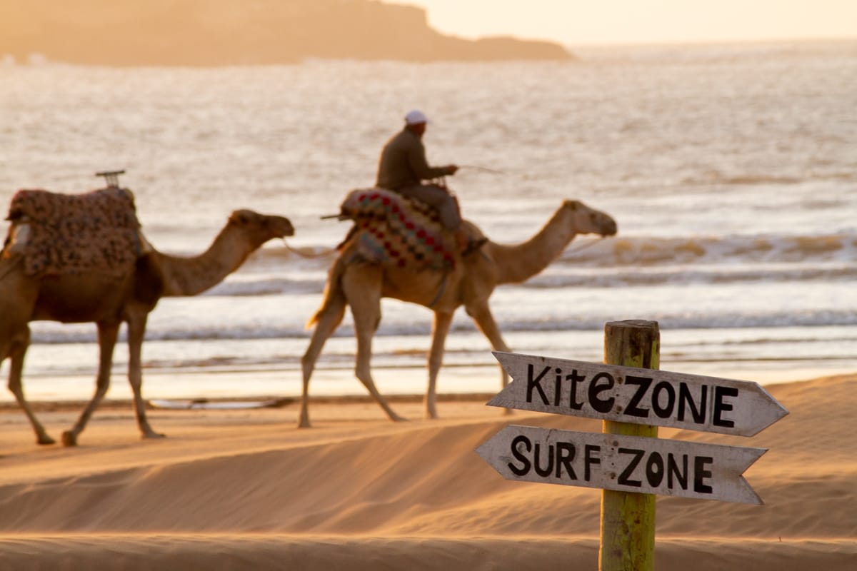 Things to do in Essaouira cover image of kite and Surf zone signs with camels in the background