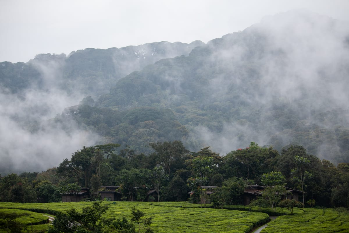 The one and only Nyungwe forest