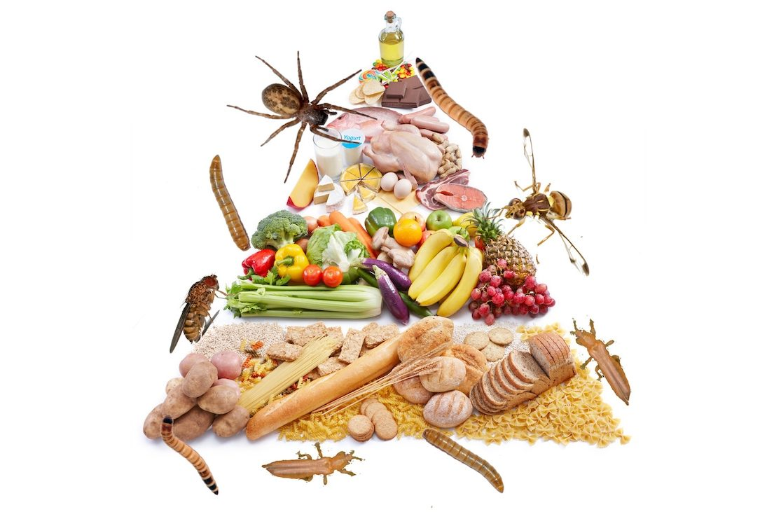 How many bugs do we eat in a year cover image of food pyramid with insects all over