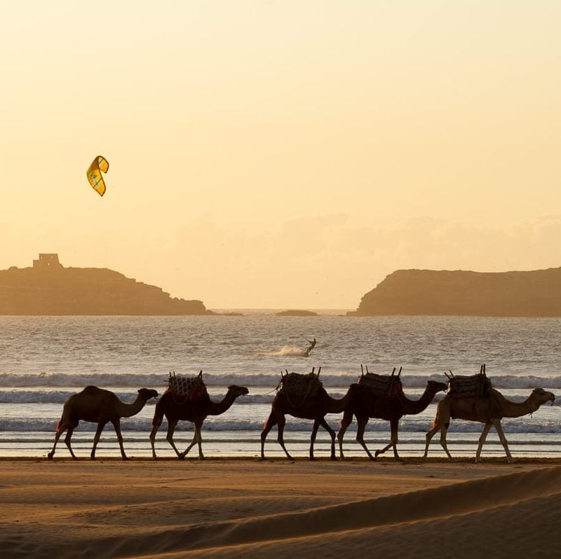 Essaouira Travel Blog cover image camels walking at sunset