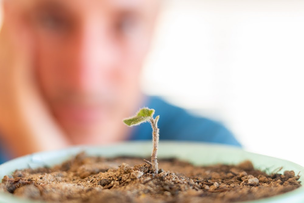 How to be more patient cover image of me watching seedling grow